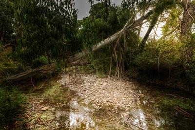 (Image#3513) Blackwood, Victoria, Australia