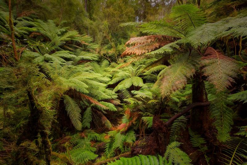 (2303) Maits Rest, Victoria, Australia
