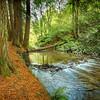 (1894) Beech Forest, Victoria, Australia
