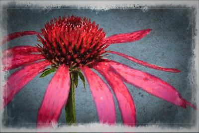 Cone Flower 1