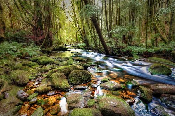 (2449) Nelson Falls, Tasmania, Australia