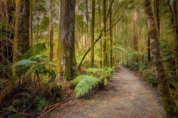 (2516) Triplet Falls, Victoria, Australia
