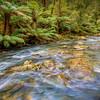 (1964) Beech Forest, Victoria, Australia