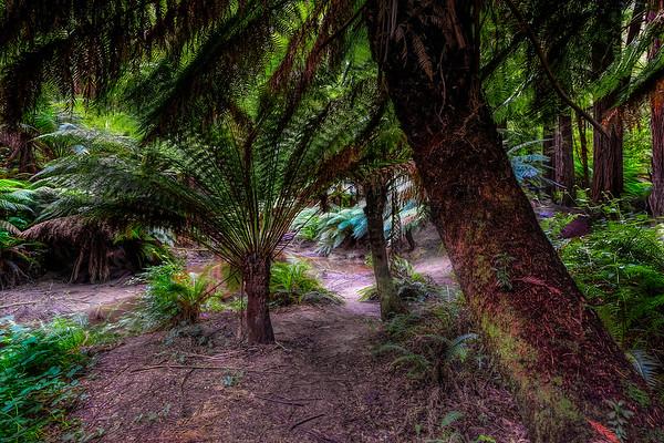 (1970) Beech Forest, Victoria, Australia