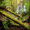 (2468) Nelson Falls, Tasmania, Australia