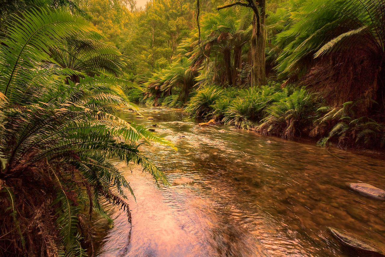 (1928) Beech Forest, Victoria, Australia
