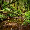 (2061) Beech Forest, Victoria, Australia