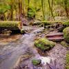 (1777) Mount Field National Park, Tasmania, Australia