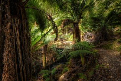 (2729) Liffey Falls, Tasmania, Australia