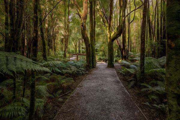 (2525) Nelson Falls, Tasmania, Australia