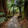 (2477) Liffey Falls, Tasmania, Australia