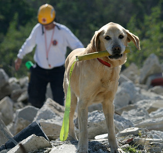 Val, FEMA certified search and rescue dog, and handler Mark Valentine at rubble training in Irwindale