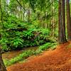 (1939) Beech Forest, Victoria, Australia