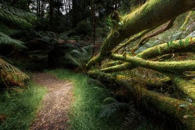(Image#3418) Melba Gully, Victoria, Australia