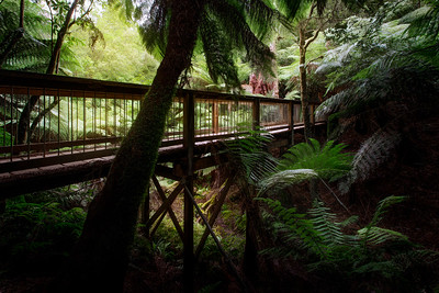 (Image#3165) Maits Rest, Victoria, Australia