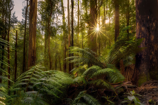 (2603) Triplet Falls, Victoria, Australia