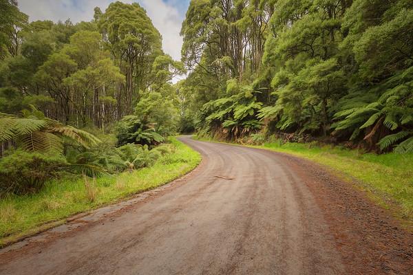 (2291) Beech Forest, Victoria, Australia