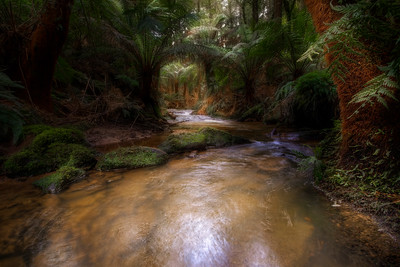 (Image#3404) Melba Gully, Victoria, Australia