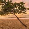 (1652) Palm Cove, Queensland, Australia