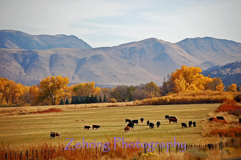 Cattle ranch just north of Topaz Lake off Hwy 395 in Ca.