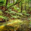 (1842) Beech Forest, Victoria, Australia