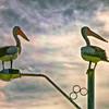 (0164) Geelong, Victoria, Australia