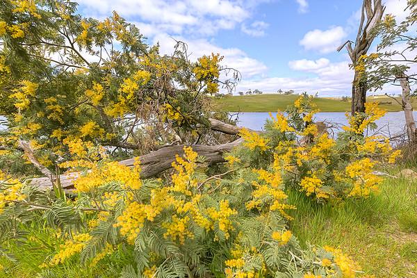 (2569) Lauriston Reservoir, Victoria, Australia