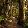 (2456) Liffey Falls, Tasmania, Australia