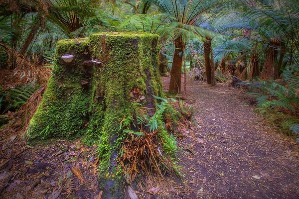 (2077) Melba Gully, Victoria, Australia