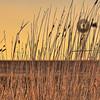 (0456) Phillip Island, Victoria, Australia