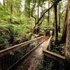 (Image#3366) Melba Gully,Victoria, Australia