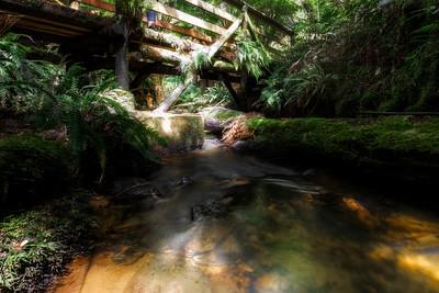 (Image#3384) Melba Gully, Victoria, Australia
