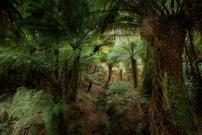 (Image#3186) Maits Rest, Victoria, Australia