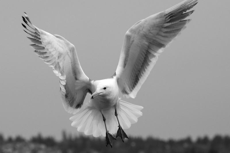 jonathan seagull
