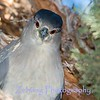Eye plumage of a male night herin