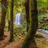 (1830) Beech Forest, Victoria, Australia