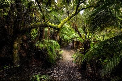 (3019) Little Aire Falls, Victoria, Australia