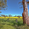 (0371) Harrow, Victoria, Australia