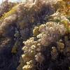 Sagebrush in Nevada/California take on fantastic colors in the fall season.