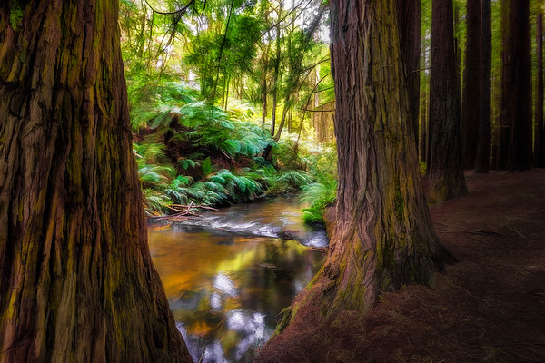 (2253) Beech Forest, Victoria, Australia