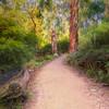 (2142) Silverband Falls, Victoria, Australia