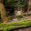 (Image#3371) Melba Gully, Victoria, Australia