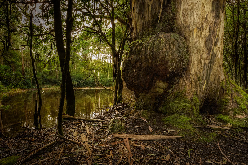 (2549) Sanatorium Lake, Victoria, Australia
