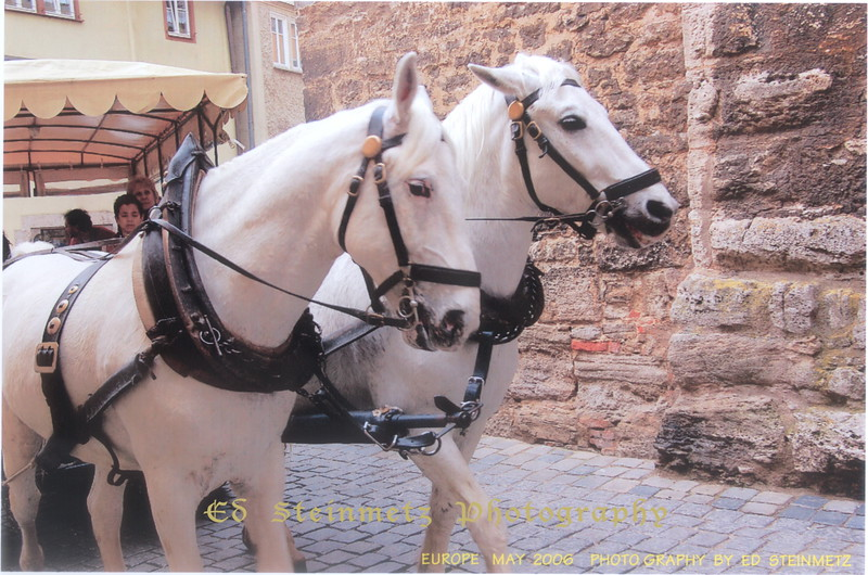 2006 WHITE HORSES PULLING WAGON GERMANY