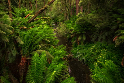 (1933) Beech Forest, Victoria, Australia
