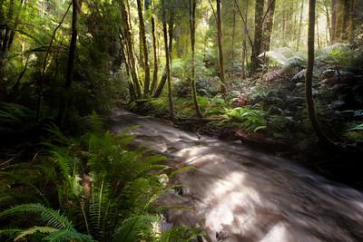 (Image#3161) Nelson Falls, Tasmania, Australia