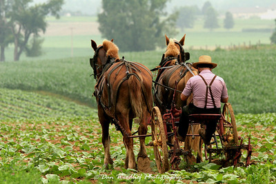Amish farmer - Lancaster County, Pennsylvania
