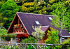 Their home --- very rare for Japanese, A-frame built w/timber imported from Canada;  In a clearing about one mile from the coast, Kure, island of Shikoku.