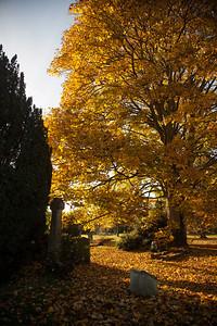 Cambridge, near my house