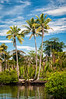Coconut Trees: front